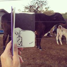 SketchBlog — Got Milk #hotelfazenda #farm #fazenda #leite #milk...