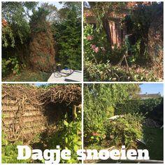 11-10-2015: al een dagje met de buurvrouw in de tuin gesnoeid. Wat een klus! Tot onze grote verrassing stond er achterin de tuin een pergola.