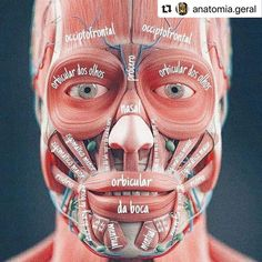 Dental Anatomy, Brain Anatomy, Medical Anatomy, Human Anatomy And Physiology, Anatomy Organs, Heart Anatomy, Human Muscle Anatomy, Massage Corps, Medical Art