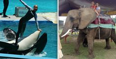 Lolita being used as a surfboard; arthritic Nosey gives rides to unsuspecting children