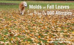 Molds On Fall Leaves Can Bring On Dog Allergies