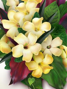 "Puakenikeni. ""Ten cent flower"" More fragrant than Plumeria and now my new favorite flower :o)"