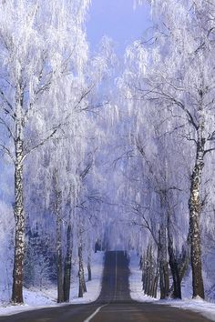Winter road by ginaups blue landscapes snow winter Lithuania road white beautiful frost light trees Winter road ginaups I Love Snow, I Love Winter, Winter Snow, Winter Road, Winter Magic, Winter's Tale, Winter Scenery, Snow Scenes, Foto Art