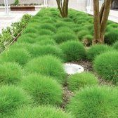12 x Festuca Gautieri - Zwenkgras of Berenvel in pot (stukprijs Modern Landscape Design, Landscape Plans, Garden Landscape Design, Modern Landscaping, Backyard Landscaping, Brick Projects, Backyard Projects, Garden Projects, Modern Gardens