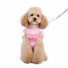Choose Online Your Dog Clothes For Sale At A Small Price.