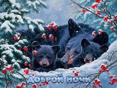 Good Night Gif, Black Bear, Animals, Xmas, Animales, American Black Bear, Animaux, Animal, Animais