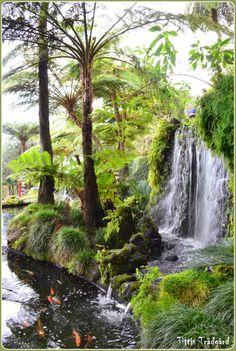 Koipond, Monte, Madeira Architectural Landscape Design