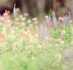 wildflower crush | Flickr: Intercambio de fotos