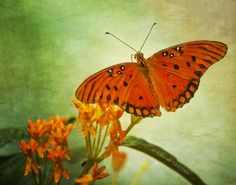 Butterfly with texture by roni chastain on 500px