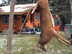 You shot a deer. Deer Deer Hang Time: Here's how long you need to wait for the tenderest meat. Deer Hunting Tips, Hunting Guns, Archery Hunting, Bow Hunting, Hunting Stuff, Archery Bows, Homestead Survival, Camping Survival, Outdoor Survival