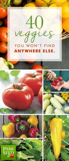 Top vegetable varieties that you can only buy at Park Seed.