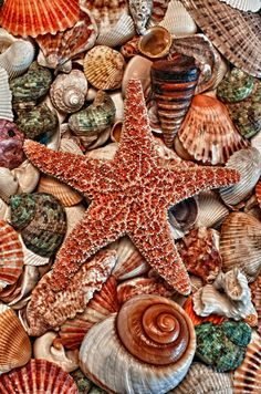 starfish and shells ....beautiful colors.....