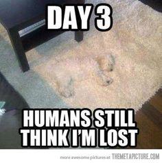 humans still think i'm lost