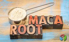 Superfoods - poznaj korzeń maca jego właściwości, dawkowanie oraz przeciwwskazania. Sprawdź dlaczego jest tak skuteczny i kiedy warto go stosować.