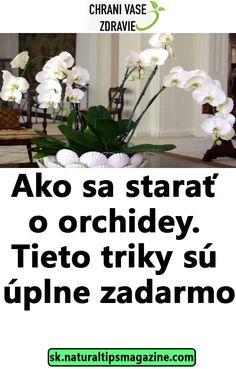 Ako sa starať o orchidey. Orchids, Plants, Home Decor, Flora, Interior Design, Home Interior Design, Plant, Home Decoration, Decoration Home