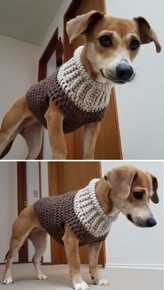 Crochet Dog Sweater Free Pattern, Crochet Dog Patterns, Crochet Designs, Knit Dog Sweater, Sweater Coats, Knitting Patterns Free Dog, Crochet Patterns For Beginners, Crochet Crafts, Knit Crochet