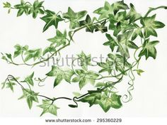 Illustration about Watercolor painting of green ivy branches and leaves on white. Illustration of black, flourish, plant - 56522282 Watercolor Leaves, Watercolor Sketch, Watercolor Paintings, Ivy Tattoo, Leaves Sketch, Donna Dewberry Painting, Plant Sketches, Decoupage, Purple Painting