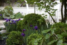 Urban courtyard in El Viso, Madrid: Urquijo-Kastner Purple Garden, Shade Garden, Garden Landscape Design, Garden Landscaping, Purple Perennials, Fast Growing Plants, Plant Design, Green Plants, Topiary