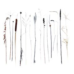 stalks (mary jo hoffman)