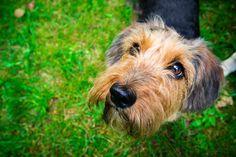 #dog #animals #dogphoto #dogportrait