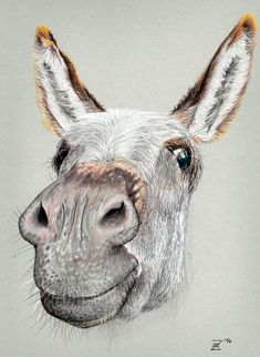"animal captions ""funny donkey"" on Behance Animal Paintings, Animal Drawings, Art Drawings, Watercolor Animals, Watercolor Paintings, Donkey Drawing, Animal Captions, Funny Captions, Cute Donkey"