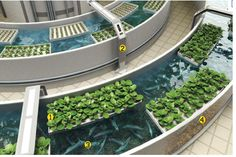 This method is recognized as nitrogen biking and is essential for success with aquaponics. Description from aquaponicsplan.com. I searched for this on bing.com/images