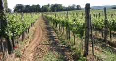 5 Tips for Planning a Wine Vacation