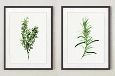 Thyme Rosemary Art Print, Herbal Kitchen Decor, Green Leaves Decoration, Herbs Chart Poster, Set of 2 Kitchen Prints, Watercolor Painting
