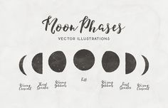 Medialoot - Moon Phases - Free Vector Illustrations