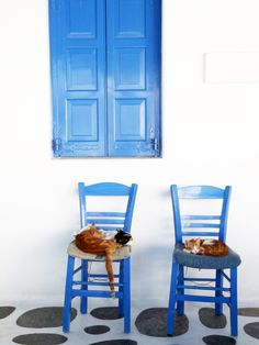 Blue and white and cats | Greek Islands-is this seat taken?
