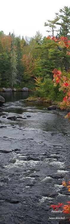 Fall colors of Maine pin via @sunishsebastian