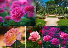 What's in Bloom, April 2014, The Dallas Arboretum, Flowers, Garden, Blooms