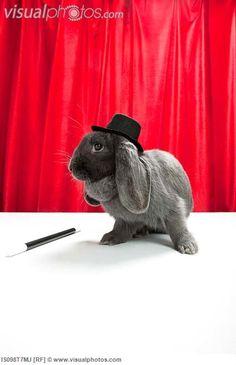 I love this rabbit's long ears