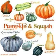 Winter Squash Guide   Co+op, welcome to the table Watercolor Cake, Watercolor And Ink, Watercolor Pictures, Watercolor Flowers, Pumpkin Squash, Photo Texture, Creative Sketches, Pencil Illustration, Food Illustrations