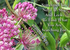 Sometimes you need to stop and look to find what you are searching for- Save the Monarch