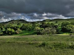 lovely photo taken of Sycamore Grove Park - Livermore, CA - by R. Porter