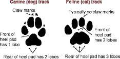 cat paw print vs dog paw print - Google Search