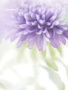 Lavender with soft Green Dark Pictures, Beautiful Pictures, Aqua Coral, Lavender Green, Happy Paintings, Pastel Colors, Pastel Flowers, Season Colors, Violet