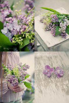 Lilac ♥