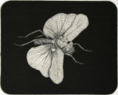 Arne Bendik Sjur. Grasshopper with wings (black background), 2000. Drypoint. 1/1. 4-3/4 x 5-3/4 inches.