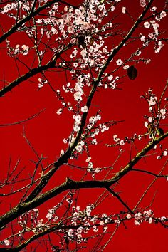 White on Red by Arkamitra Roy, via 500px