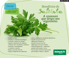 Salsinha é ótima aliada da saúde, possui propriedades de limpeza e desintoxicação do organismo. Cuidar da saúde #esseéoplano #unimedmanaus