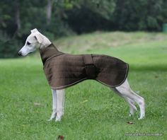 Therma-Dry Whippet Dog Coat Due to customer demand we have developed a Whippet Therma-Dry Dog Coat The Whippet coat is cut in a way to follow the