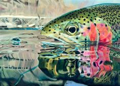 http://finefishart.com/rainbow-trout-reflections.html Rainbow Trout Print