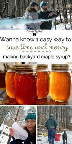 We love making maple syrup in our backyard and I've written lots of tutorials about how we do it. But this little tip is colossal! A no-cost, super-easy way to save a little money while making DIY maple syrup. Maple Syrup Taps, Sugaring, Hobby Farms, Natural Sugar, Preserving Food, Sustainable Living, Food Storage, Homesteading, The Help