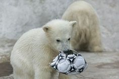 Can you help me? My soccer ball.  It's broken.