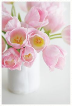 Pink tulips  I have been to Holland and my maiden name is Holland.  hehehe