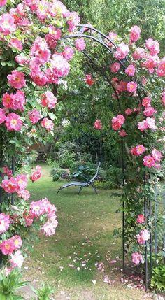 Liegen unter Rosen