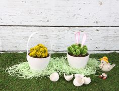 Celebrate spring with Desert Gems cacti!