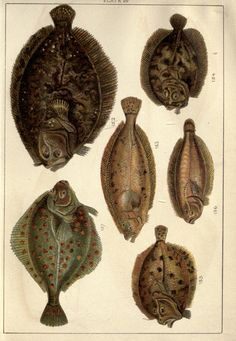 Our country's fishes and how to know them : - Biodiversity Heritage Library